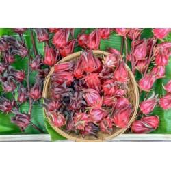 Fleurs de Bissap